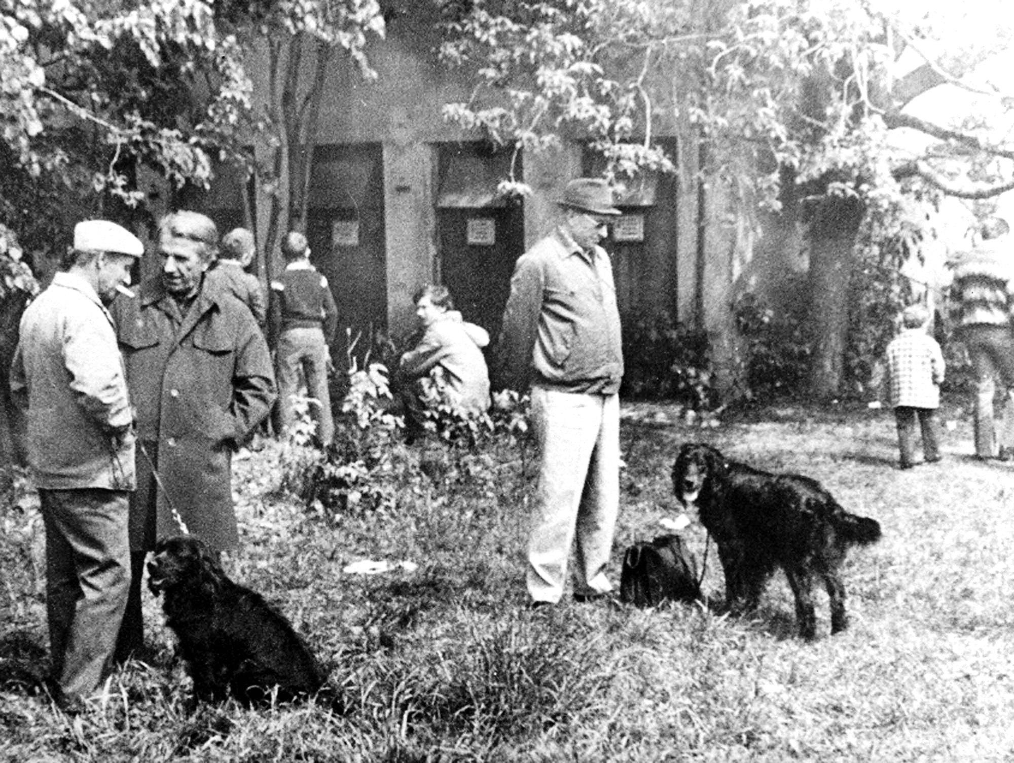 1981.06.07. Выставка охотн. собак в Ногинске