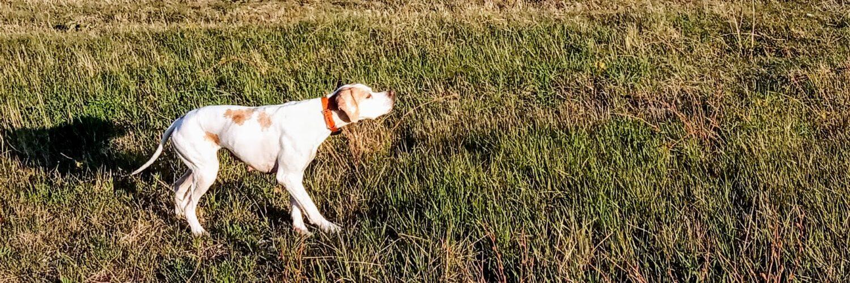 Об охоте и собаках